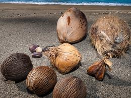 Samen in allen Größen am Strand von Rakata (c) Tobias Schorr