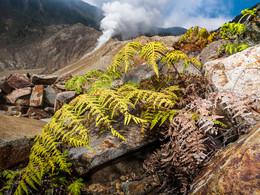 Trotz des ätzenden Bodens haben es ein paar wenige Pflanzenarten geschafft, sich im Krater anzusiedeln. (c) Tobias Schorr