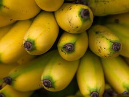 Leckere, kleinen Bananen sind immer ein guter Snack! (c) Tobias Schorr