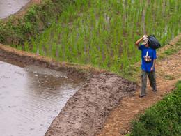 Reisfelder beherrschen die Landschaft von Java (c) Tobias Schorr