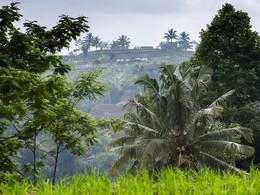 Tropisches Dorf auf Java (c) Tobias Schorr