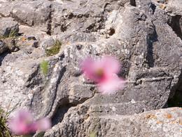 Der Löwe im Artemidoros-Heiligtum symbolisiert den Gott Apollon. (c) Tobias Schorr