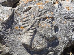 Ein Portrait des Artemidoros in Alt-Thera. (c) Tobias Schorr