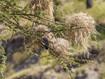 Ein Vogel, der hängende Nester baut (c) Tobias Schorr