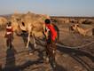 Kamele im Basislager (c) Tobias Schorr