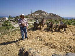 Beim Dreschen der Fava-Bohnen in Akrotiri