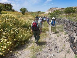 Einer der Wanderwege führt durch die Weinfelder (c) Tobias Schorr