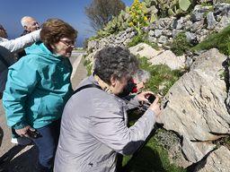 Die Gruppe schaut sich uralte Fossilien am Profitis Ilas Gipfel an.